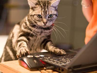 cat work